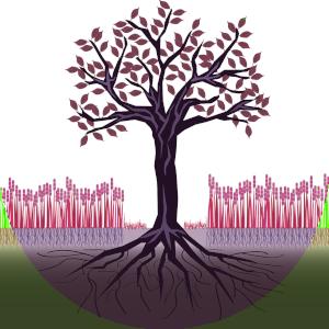 Agroforesterie Logo